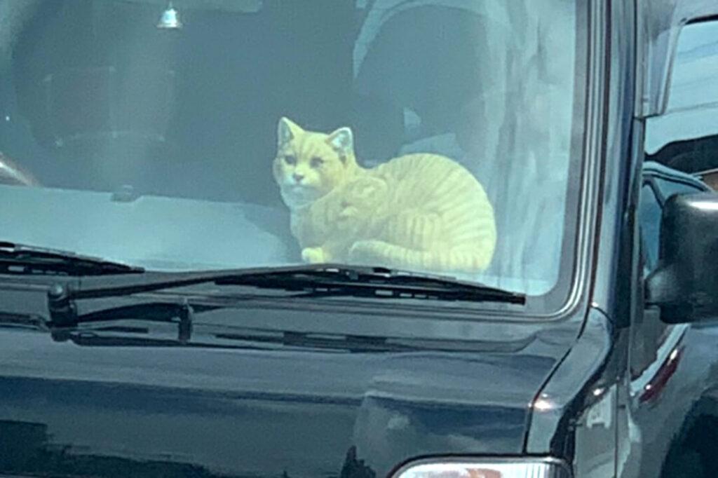 車の中から猫がずっと見てる